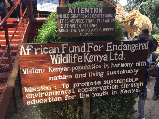 African Fund for Endangered Wildlife (Kenya) Ltd. - Giraffe Centre: photo5.jpg