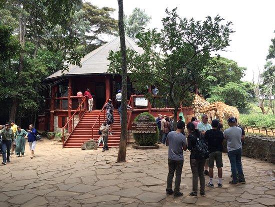 African Fund for Endangered Wildlife (Kenya) Ltd. - Giraffe Centre: photo7.jpg