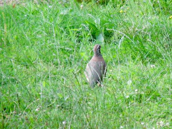 Craven Arms, UK: Wildlife around the grounds