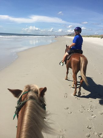 Are There Animals In Amelia Island Fl
