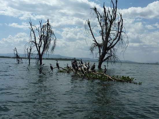 Lake Nakuru National Park, Kenia: 2503 (23)_large.jpg