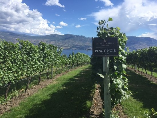 West Kelowna, Kanada: Mission Hill vineyards with Okanagan Lake in the background.