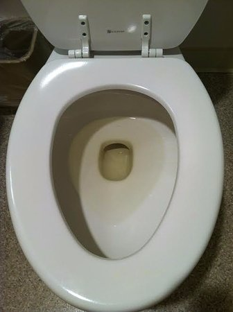 Rodeway Inn Edgewater: I thought the toilet had been unflushed after someone urinated.