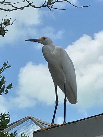 Tavernier, Floride : Florida Keys Wild Bird Rehabilitation Center