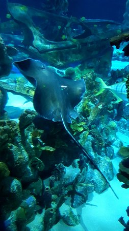 Tempe, AZ: SEA LIFE Aquarium