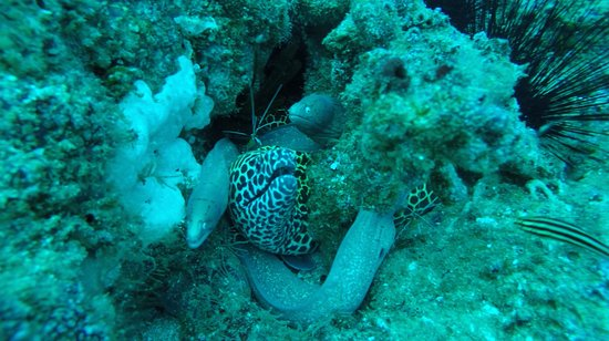 Tofo, Mozambico: Moray eels and cleaning shrimp