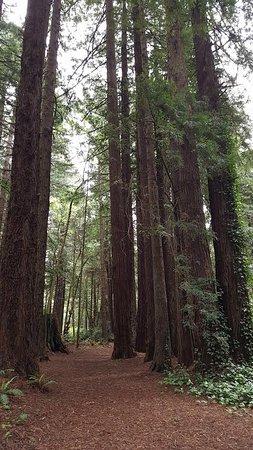 Emerald Forest Cabins & RV