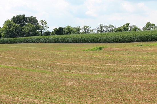 Hummelstown, PA: view of cornfield from 237 row