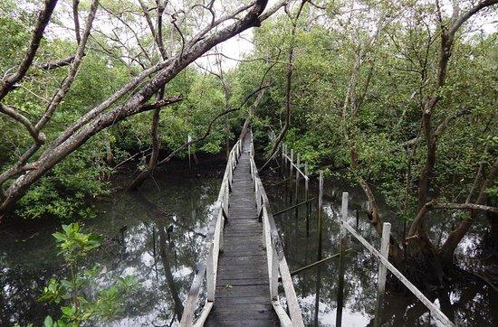 l incredibile foresta - 5 Tempat Wisata Keren Di Natuna, Wajib di Kunjungi Nih