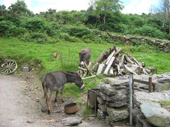 Kenmare, Ierland: Die absolut handzahmen Esel