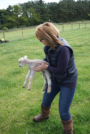 Strathkinness, UK: Linda was great showing us around and introducing us to their new 1 day old lamb!