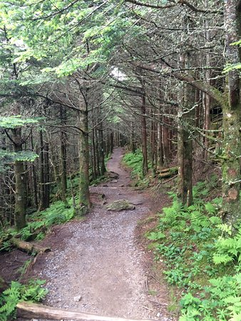 Burnsville, Северная Каролина: I think this short trail (3/4 mile) is called the Balsam Nature Trail.