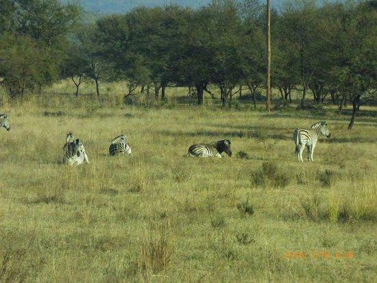 Cullinan, Sydafrika: Wildlife on approach rod