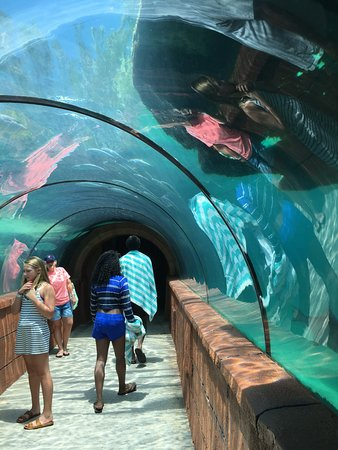 Marine Habitat at Atlantis: awesome tunnel with access under the Lagoon Bar and Grill