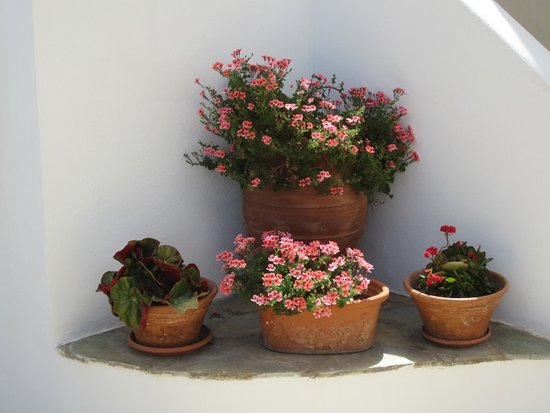 Sirines Studios and Apartments: Flowers at the bottom of our steps