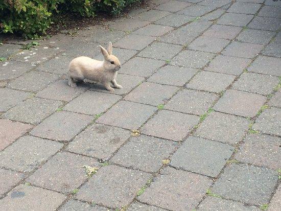 แลงลีย์, วอชิงตัน: cute bunny