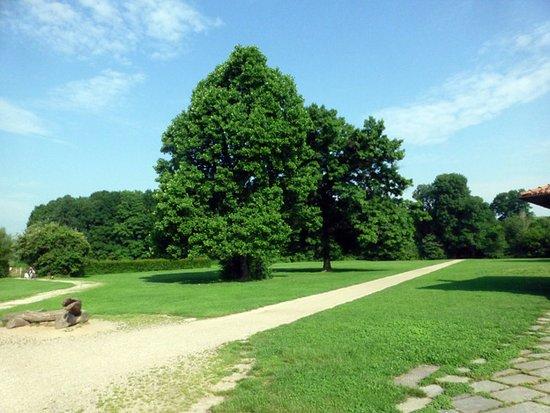 Boscoincitta: 広々としたところもあるし、奥の方には林がある
