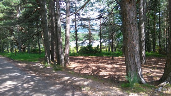 Aviemore, UK: Our bike ride round Loch Morlich