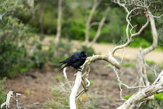 Portsea, Australien: photo0.jpg