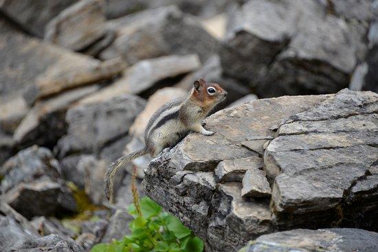 Kananaskis Country, Kanada: Squirrel at Rawson Lake