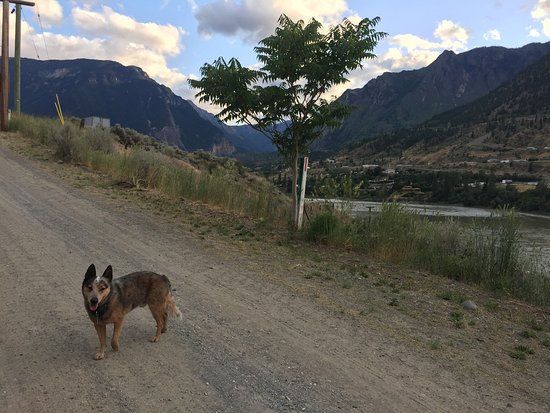 Lillooet, Canadá: Tye welcomes all friendly dogs!