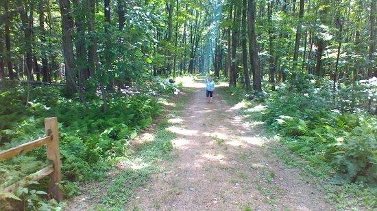 Punxsutawney, Pensylwania: Woodland trail