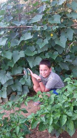 Raul nel nostro orto