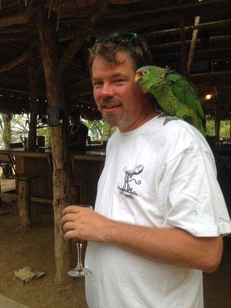 Pueblo de Bocas, Panamá: Maestro the parrot, they say he's an a..hole.