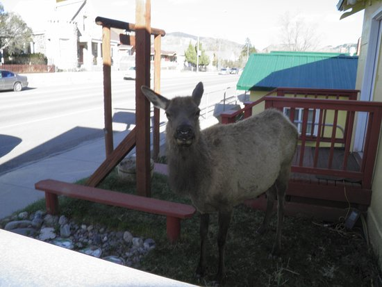 Riverside Cottages: You never know who will stop by for a visit