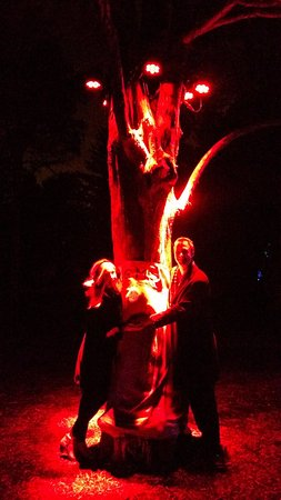 Lisle, IL: Illumination - Hug a Tree