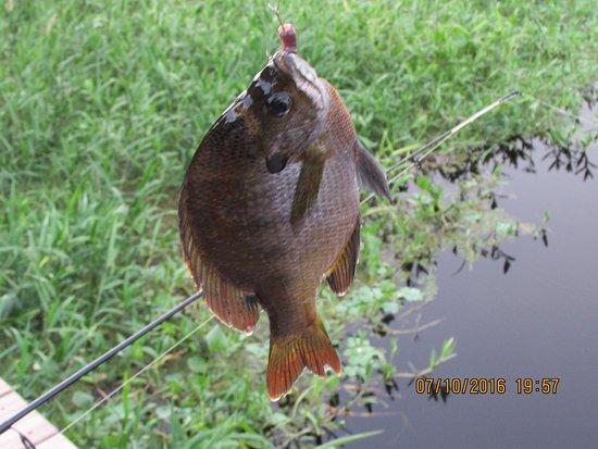 Astor, ฟลอริด้า: Fishing