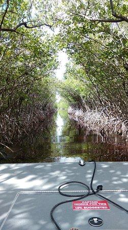 Jungle Erv's Everglades Airboat Tours: IMAG0617_large.jpg