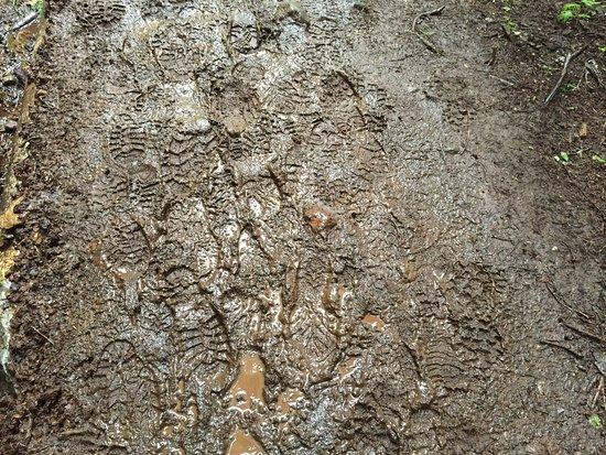 Glacier, WA: The Heliotrope Ridge Trail is muddy! 07/15/16