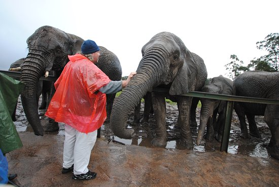 Изображение Knysna Elephant Park Lodge