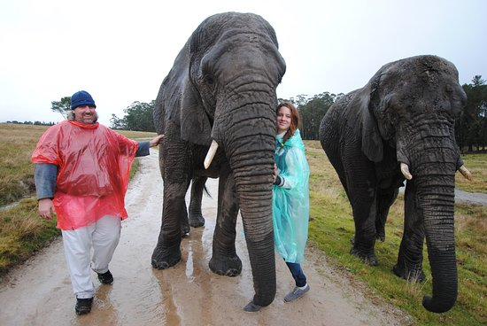 Foto de Knysna Elephant Park Lodge