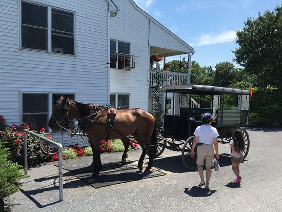 Strasburg, PA: Ed's buggy rides