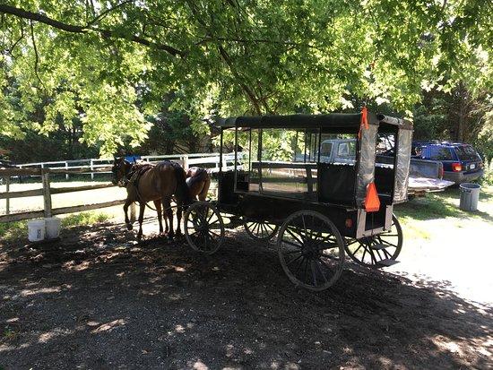 Strasburg, Πενσυλβάνια: Ed's buggy rides