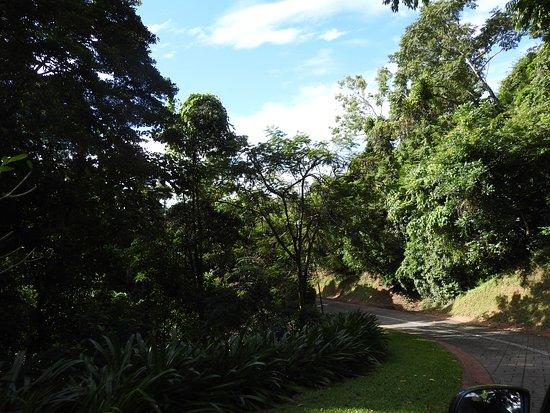 Trinity Beach, أستراليا: The main driveway up to the property