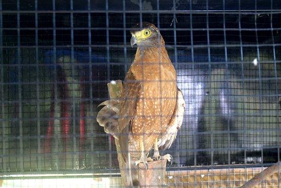 Lyger Animal Sanctuary