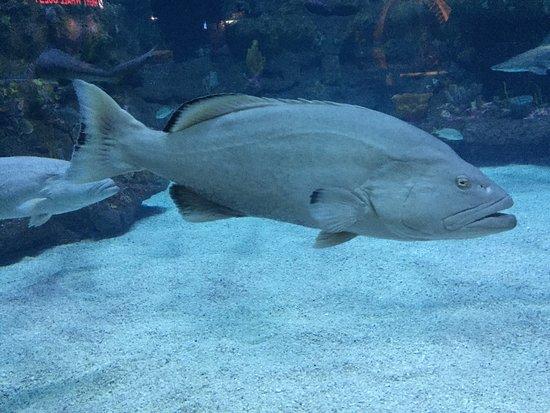 North Carolina Aquarium at Fort Fisher : photo1.jpg