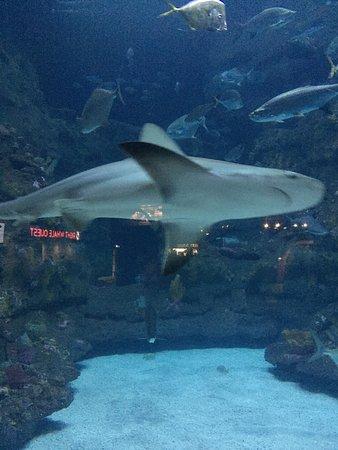 North Carolina Aquarium at Fort Fisher : photo2.jpg
