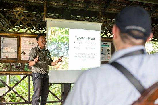 Kinabatangan District, Malezya: Free Orang Utan talk everyday by our in-house experts