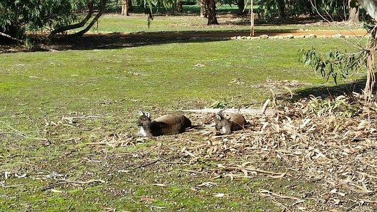 Kingscote, Australia: 20160708_121656_large.jpg