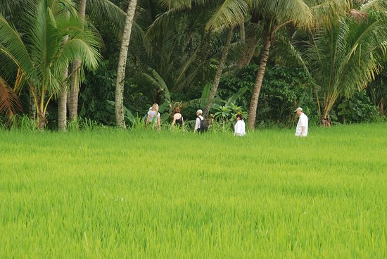 ONEWORLD retreats Kumara: Rice field walk