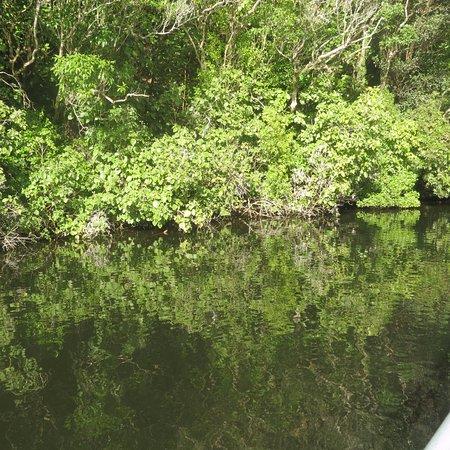 ZEALANDIA Sanctuary : Reflection