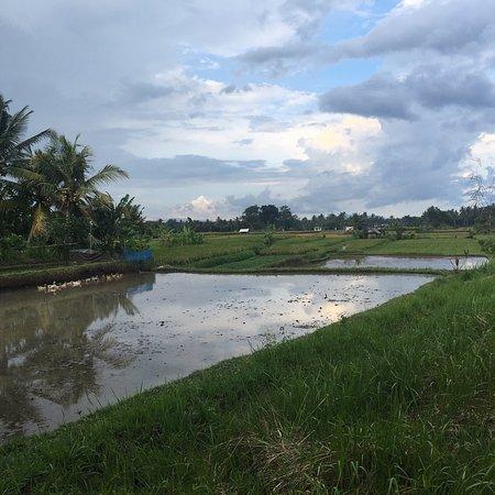 The Samaya Bali Ubud: photo7.jpg