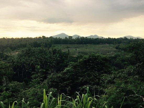 The Samaya Bali Ubud: photo9.jpg