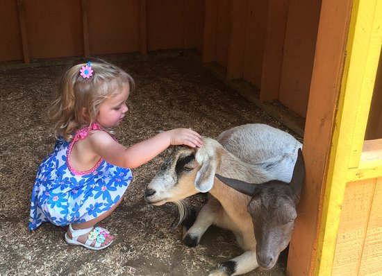 Green Meadows Petting Farm: Kids!
