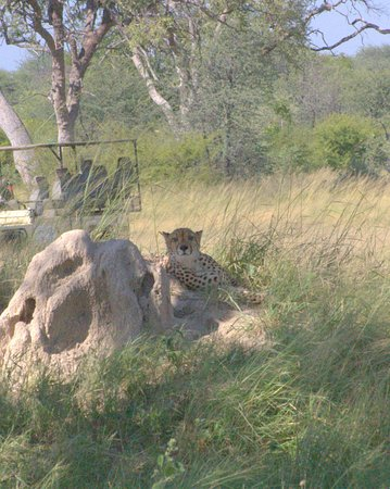 Hwange National Park, Zimbabwe : a guest close to our tent