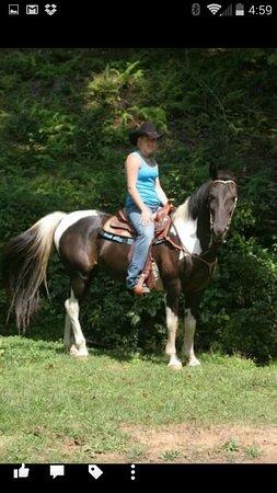 Sunset, Carolina del Sud: Come enjoy the mountains on horseback!